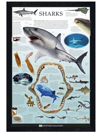 Black Wooden Framed Sharks Framed Poster