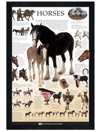 Black Wooden Framed Horses Framed Poster