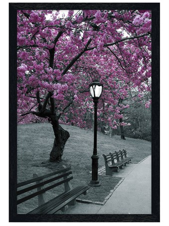 Black Wooden Framed Blossom in Central Park Framed Poster