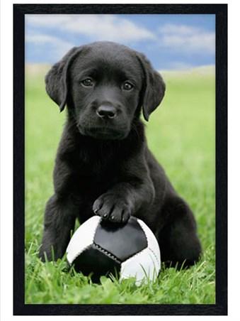 Black Wooden Framed Cute Black Labrador Puppy Framed Poster
