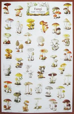 Fungi - Mushroom Identification