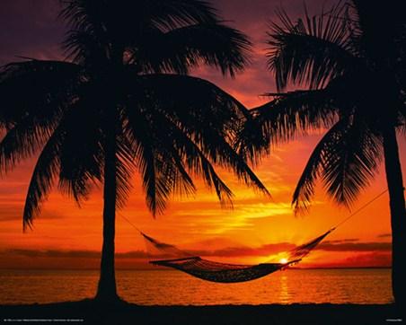 Beach Palm Tree Sunset Hammock Wallpapers