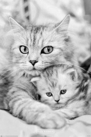 Kitten Love - Keith Kimberlin