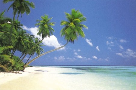 Maldive Morning - Tropical Island