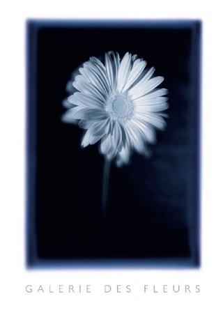 Gerbera in Full Bloom - Galerie des Fleurs