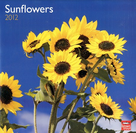 Botanical Beauty - Sunflowers