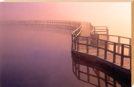 Misty Boardwalk in Canada - Dale Wilson