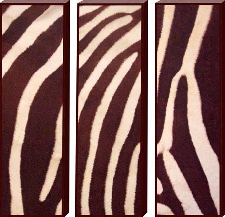 Animal Art Trio - Animal Print