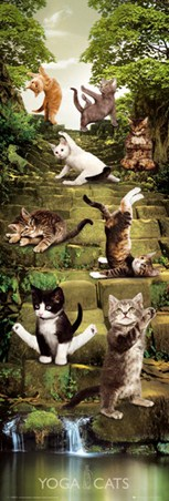 Salute to the Sun - Yoga Cats