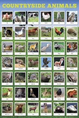 Great British Wildlife - Countryside Animals