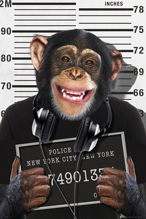 Mugshot - Chimp