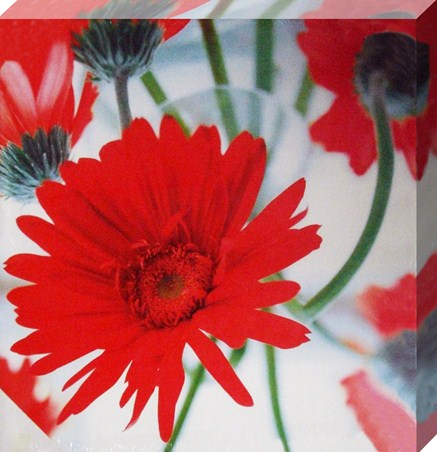 Dancing Red Gerberas - Helen Norman