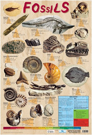 What are the different methods of hookup fossils