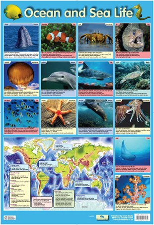 Ocean and Sea Life - Sea Creatures