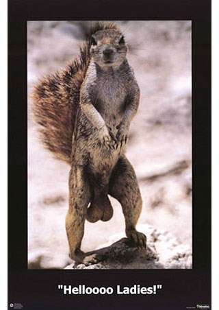 Helloooo Ladies! - Squirrel