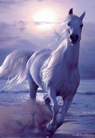Galloping Horse - Arabian Nights - Lassen