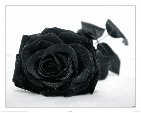 Gothic Rose - Black Flower