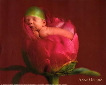 Baby in a Bud - Anne Geddes