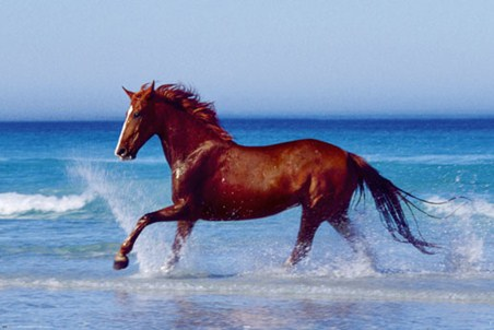 Cantering on the Sea Shore - Horse on the Beach
