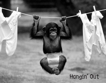 Hangin' Out - Monkey Business