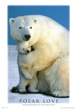 Polar Love - North Pole