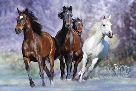 Four Horses Galloping - Bob Langrish