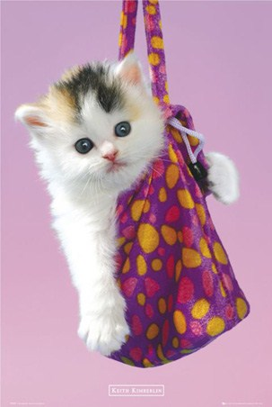 Kitten in a Handbag - Keith Kimberlin