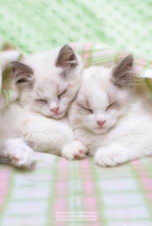 Sleepy Cats - Keith Kimberlin