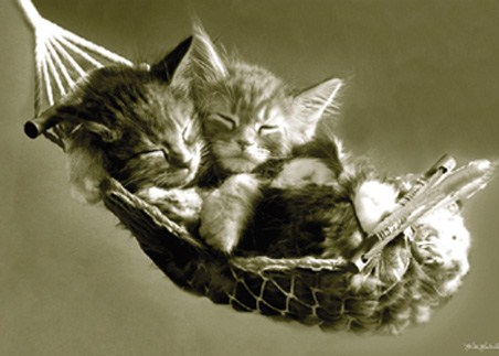 Kittens Asleep in a Hammock - Sleeping Kittens