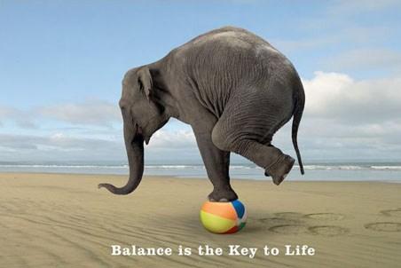 Balance is the key to Life - Elephant Tricks
