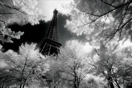 The Eiffel Tower through the trees - David Noton