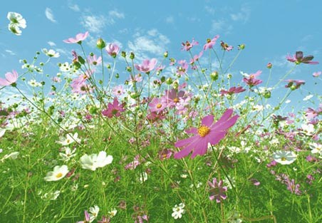 Meadow Full of Flowers - 8 Sheet Giant Wall Mural