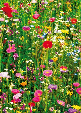 Meadow of Flowers - 4 Sheet Wall Mural