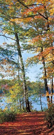 Seeweg Forest in The Fall - 2 Sheet Door Mural