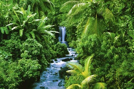 Trickling Stream amongst the Plants - Rainforest