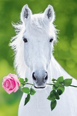 White Stallion Holding Pink Rose - A Regal Horse by Holgar Schupp