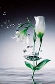 Crystal Flowers by David Jay Zimmerman Digital Art Mini Mural