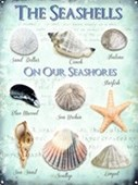 On Our Seashores The Seashells