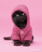 Cute Kitten In A Hoody Wildside