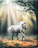 Glimpse of a Unicorn Canvas Print Anne Stokes