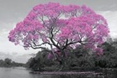 Tree In Bloom Natural Pink