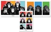 Chimp 3 Pack Poster Bundle Deal