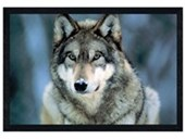 Black Wooden Framed Grey Wolf Animal Photography