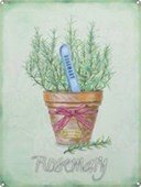 Rosemary Herb Pot