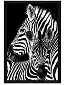 Black Wooden Framed Zebra & Foal Black and White