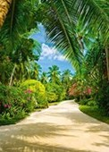 Tropical Pathway Step Into Paradise
