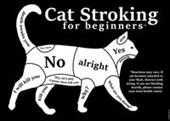 Cat Stroking For Beginners