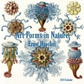 Art Forms In Nature Ernst Haeckel