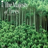 The Majesty of Trees Wonders Of Nature