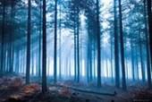 Forest Tom Mackie